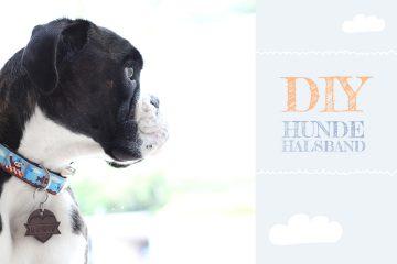 DIY-Hundehalsband