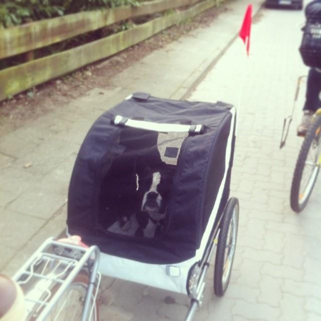 fahrradfahren mit hund tipps wie man auf l ngeren touren trotzdem spa hat der blog f r. Black Bedroom Furniture Sets. Home Design Ideas