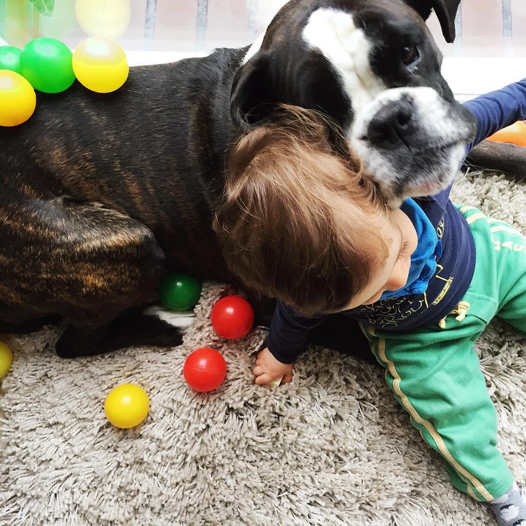 Baby und Hund zueinander fuehren