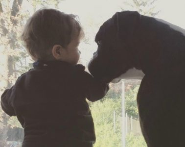 baby and dog 990