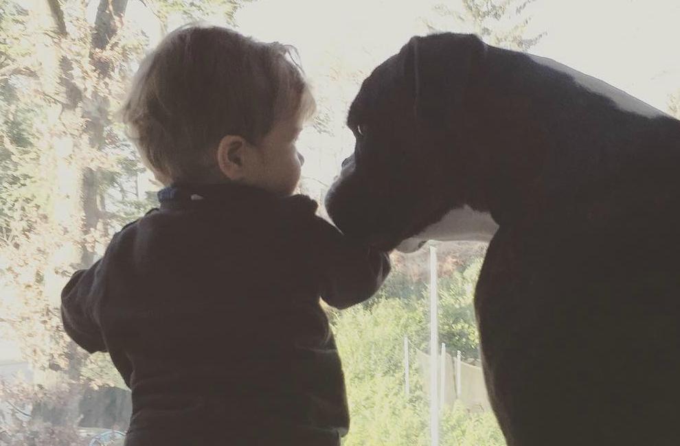 Ikea Patrull Fast Safety Gate Reviews ~ Baby und Hund eine tierisch gute Freundschaft  Siebenkilopaket  Das