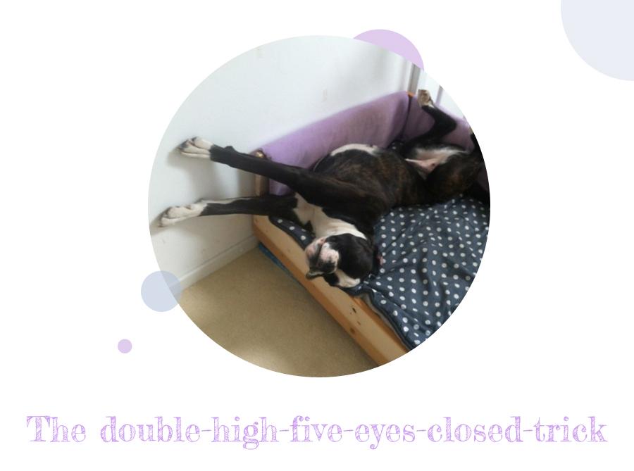 diy freutag hundebett aus holz selber bauen der blog. Black Bedroom Furniture Sets. Home Design Ideas