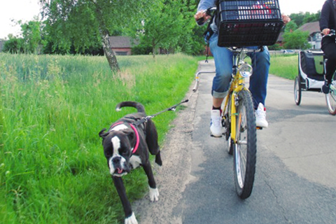 fahrradfahren mit hund brauche ich einen helm werbung. Black Bedroom Furniture Sets. Home Design Ideas