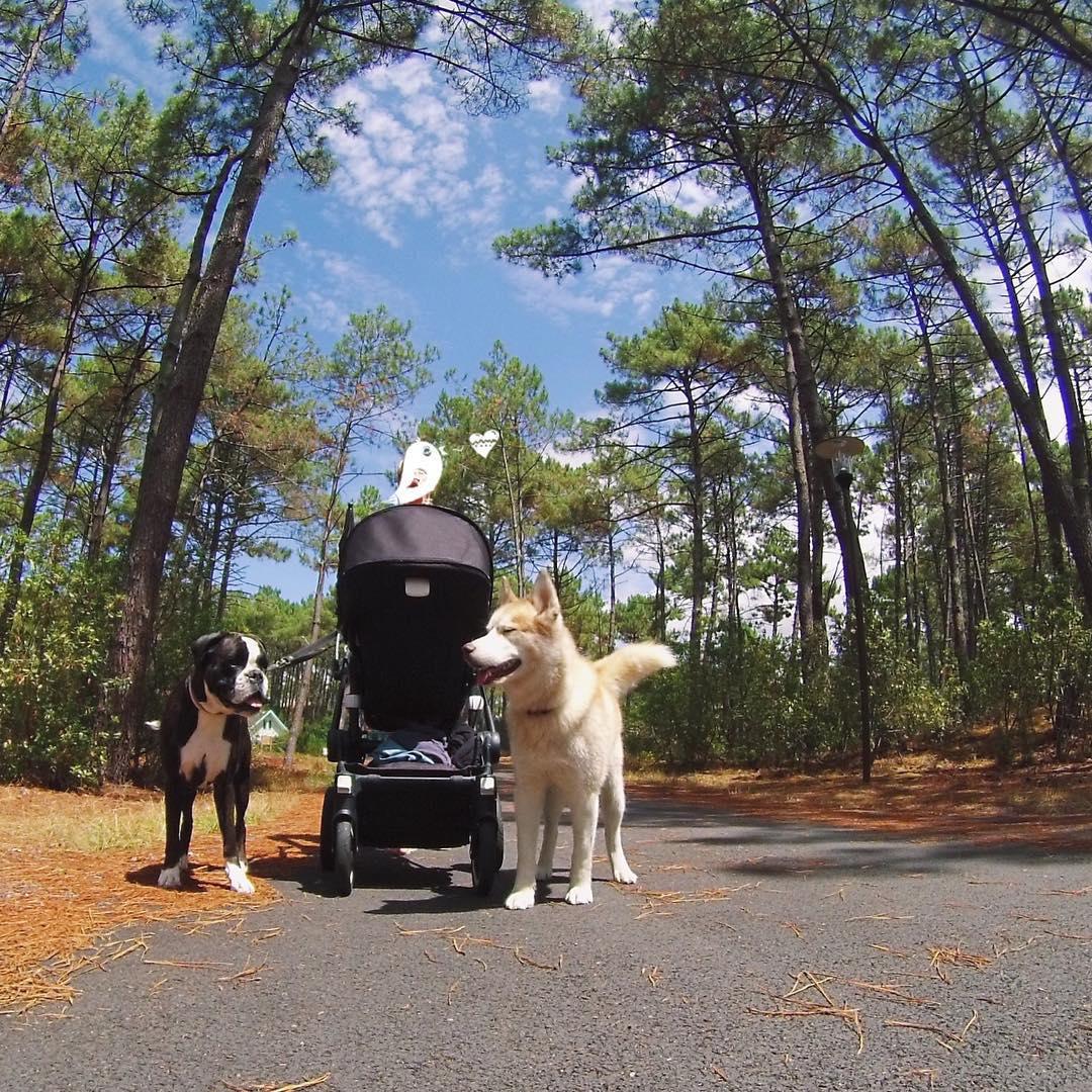 Elternzeit Reisen Campingurlaub mit Baby und Hund