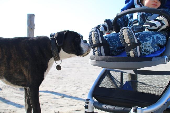 Kinderwagen mit Hund welcher