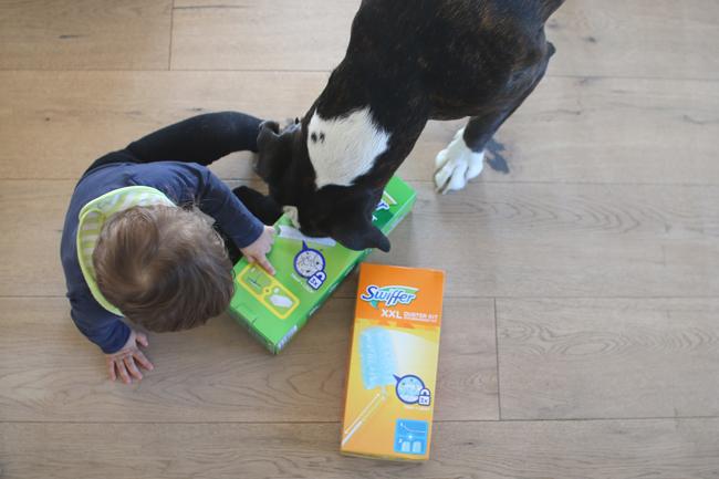 Sauberer Haushalt mit Hund
