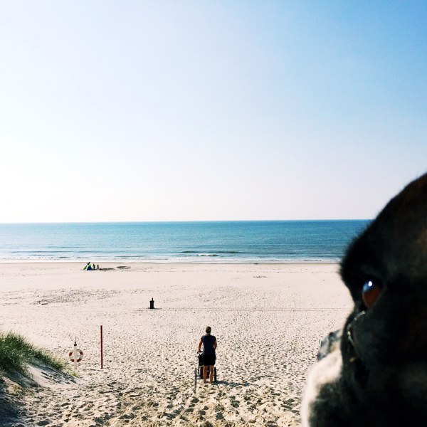 hundestrand-boxer-daenemark-henne-strand-urlaub-mit-hund