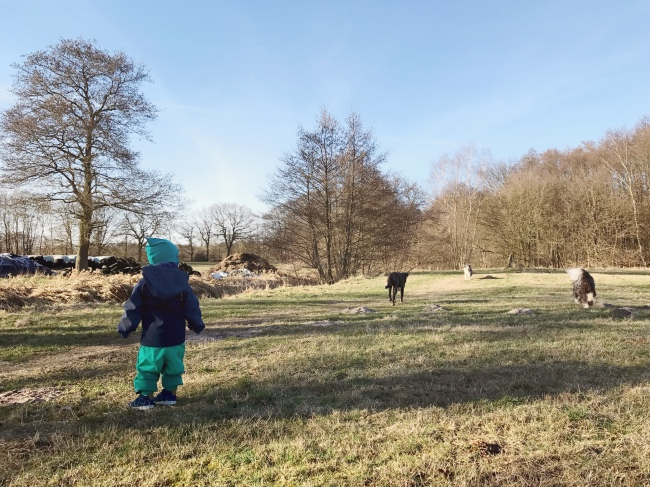 Familienausflug Lüneburger Heide - fünf Tipps & Spielideen