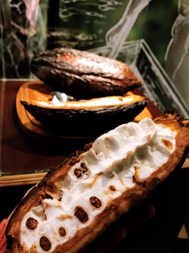 wonach schmeckt die Kakaofrucht interaktives Schokoladenmuseum