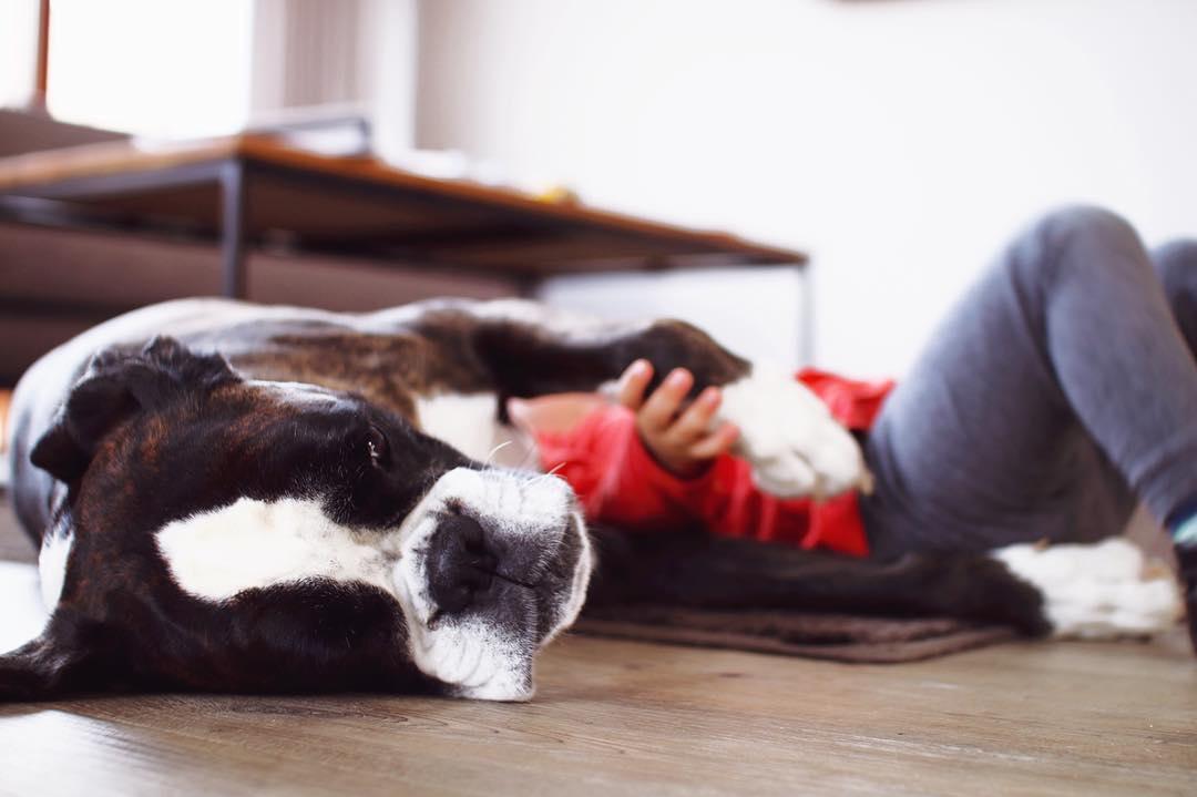 Urlaub mit Hund Landal Greenparks Familienurlaub Ferienpark mit Hund