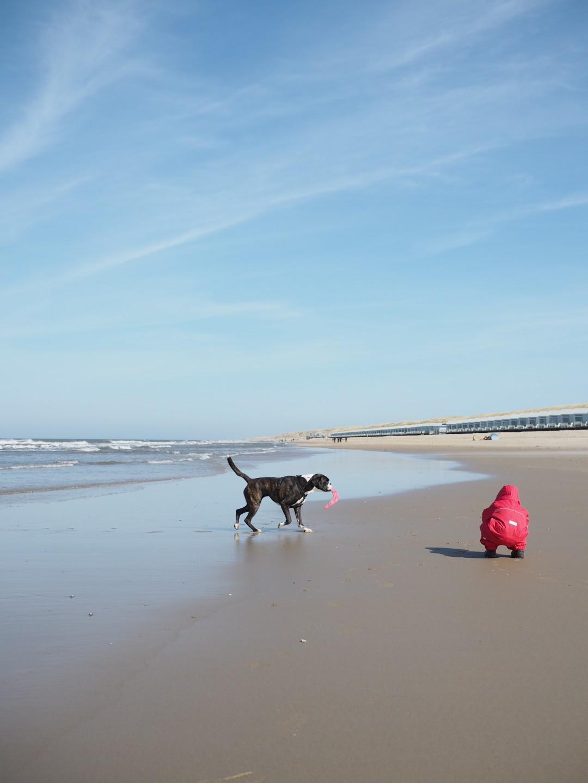 Familienurlaub mit Kind und Hund an der Nordsee Strandhaus Ferienpark Landal Beach Resort Ooghduyne