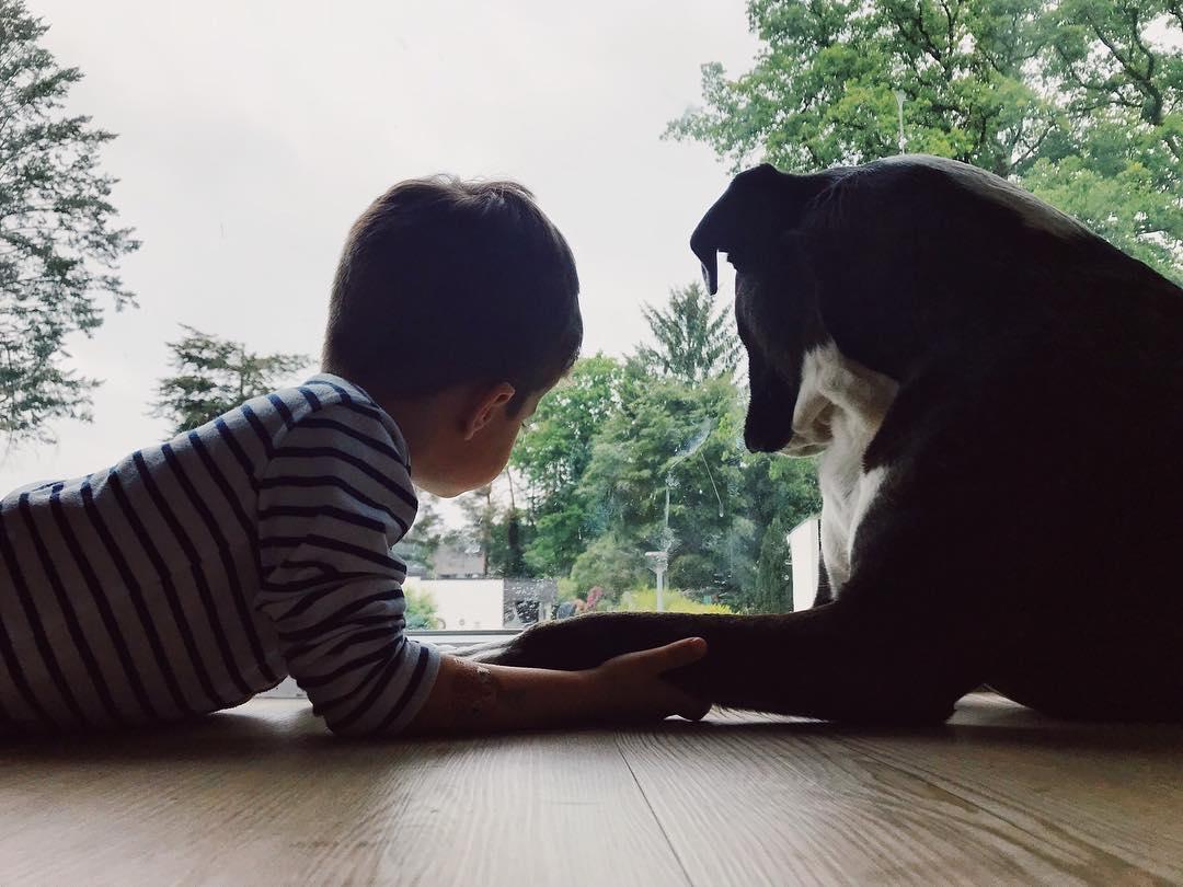 Kind und Hund - das Familienleben