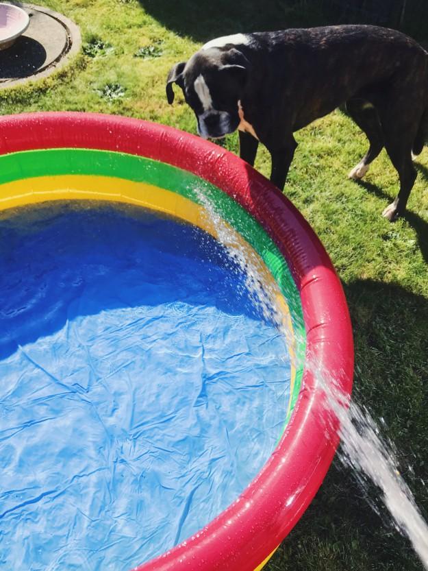 Planschbecken ab wann - Spielideen für einen Sommer mit Kindern