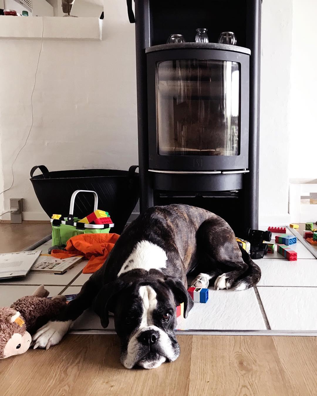 Familienurlaub in Dänemark mit Hund und Kindern