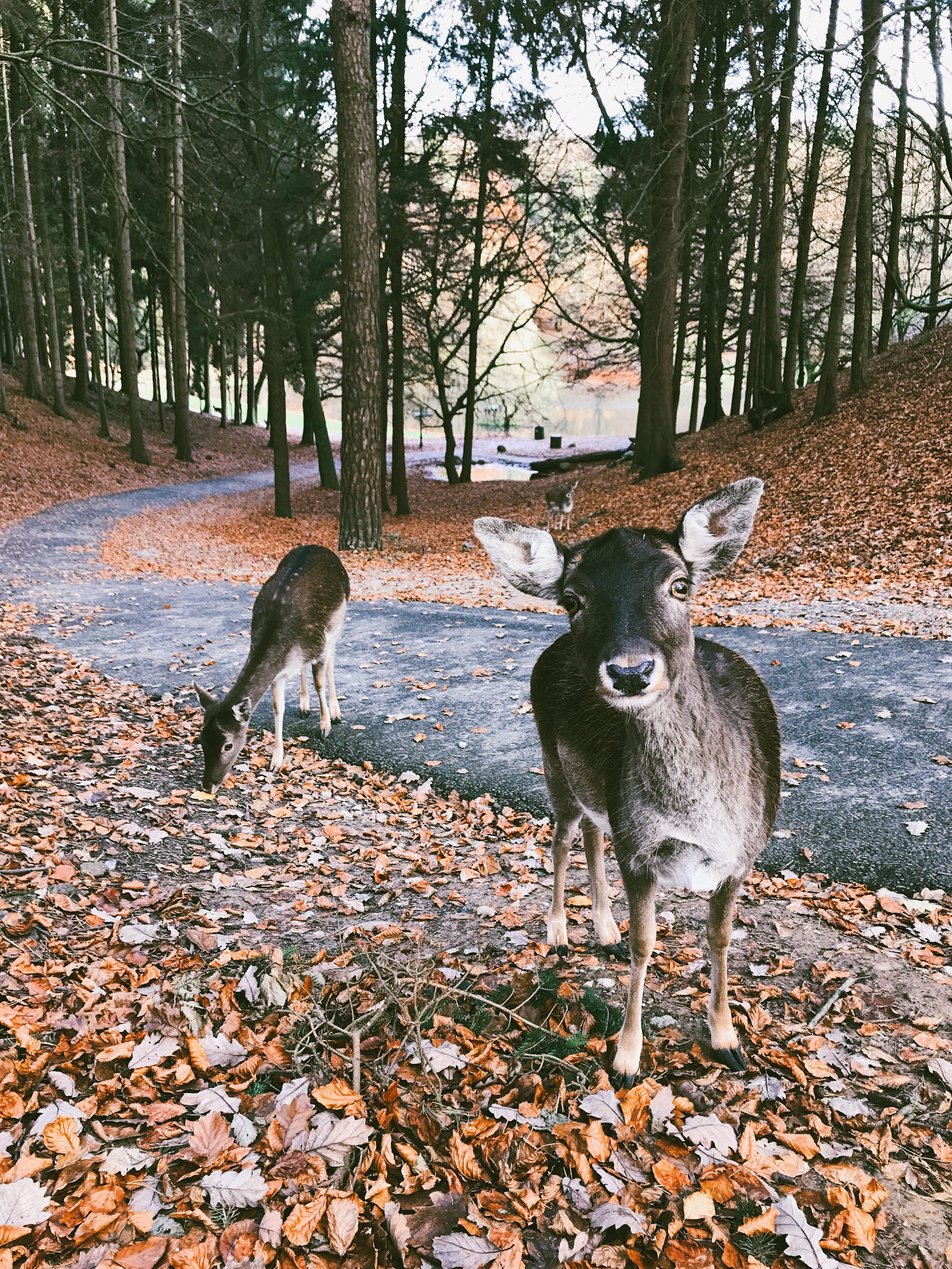 Herbst mit Kindern - Besuch im Tierpark Bucket List