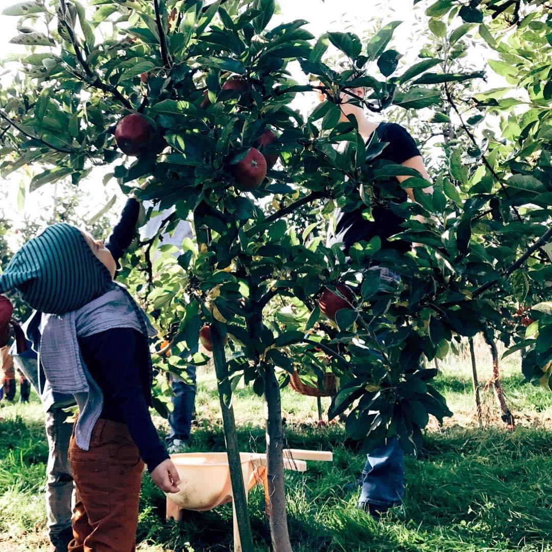 Herbst mit Kindern Bucket List Äpfel pflücken