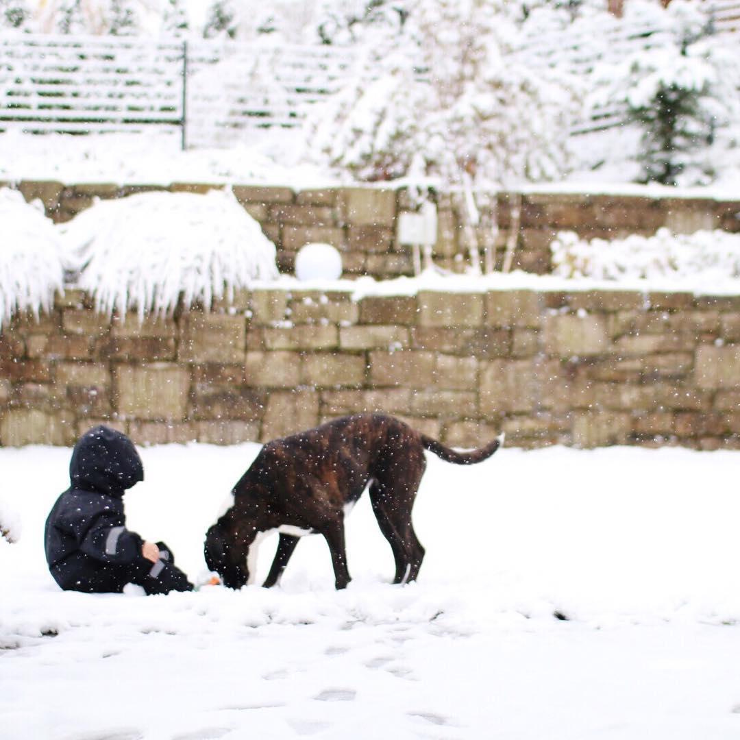 Schneeballschlacht mit Kind und Hund - Winter Bucket List für Familien