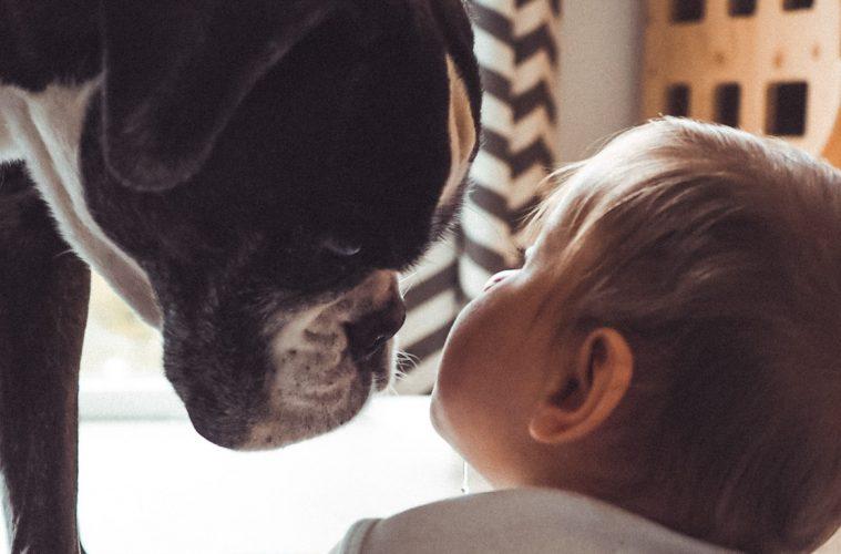 Regenbogenfamilie Blog über zwei Mütter